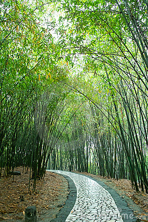 Path in bamboo forest