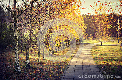 Path with birch trees in autumn