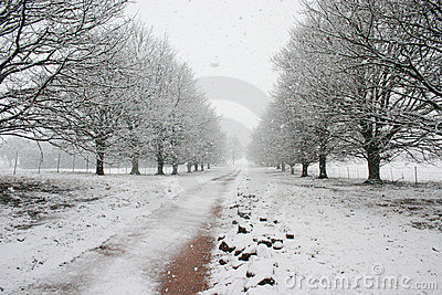 Path covered by snow leading to horizon
