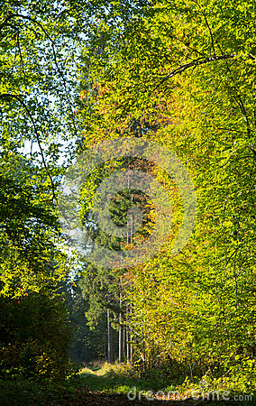 Path crossing autumnal stand of Bialowieza Forest
