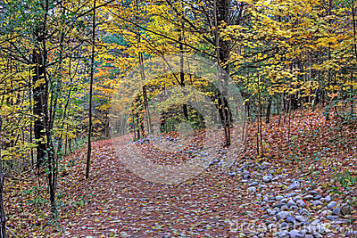 Path in the Fall Forest