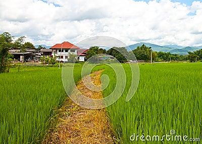 Path farm