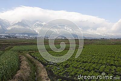Path Through Farmlands
