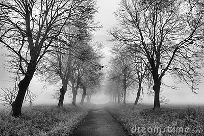 Path with fog