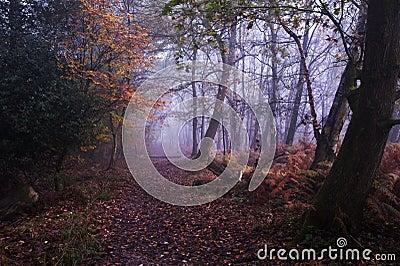 Path through foggy misty Autumn forest