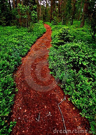 Path into the forest