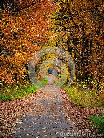Path in forest during autumn