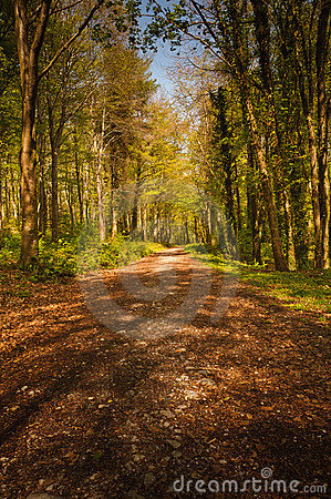 Path in forest, Ireland