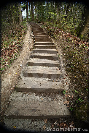 Path in forest with steps