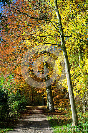 Path through forest with vibrant autumn colors