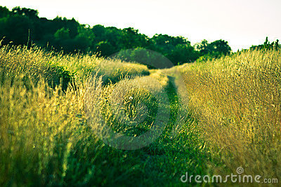 Path in grass
