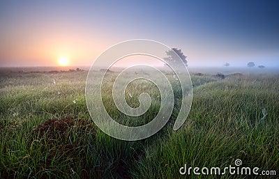 Path through grass in misty sunrise