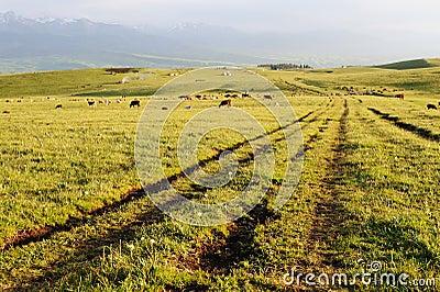 Path in grassland