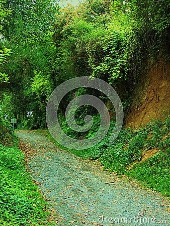 Path Through Green Bluffs