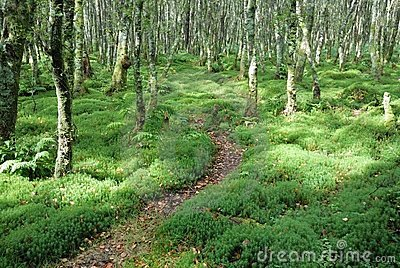 Path in green forrest