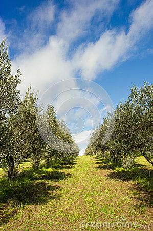 Free Path In Italian Vineyard Stock Photography - 30364342