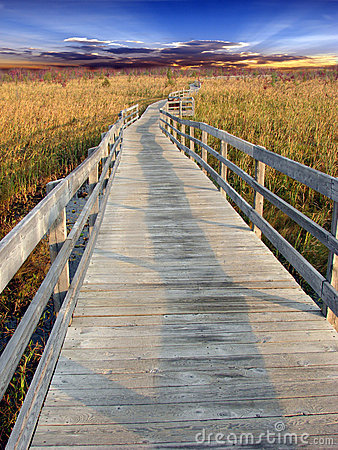 Free Path In Marsh Royalty Free Stock Photo - 5395425