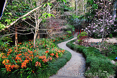 Path through Japanese garden in spring