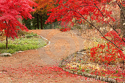 Path and Japanese Maples