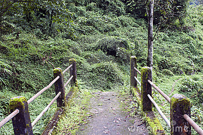 Path through jungle