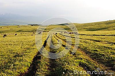 Path in kalajun grassland