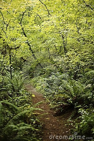 Path into the light of the forest