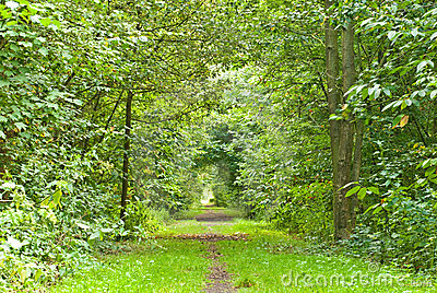 Path through lush forest