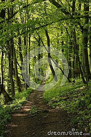 A Path through a lush green forrest