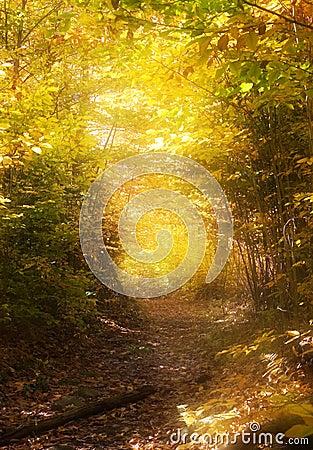 Path through the magic forest