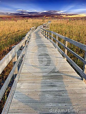 Path in marsh