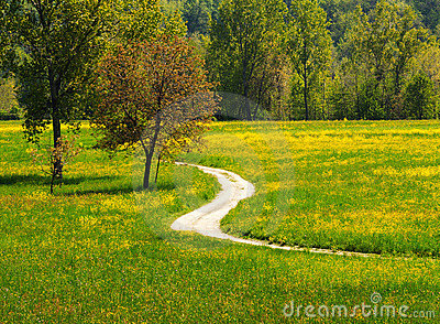 Path in the meadows