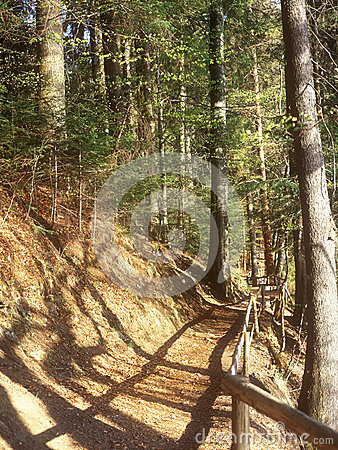 The path in the mountain forest.