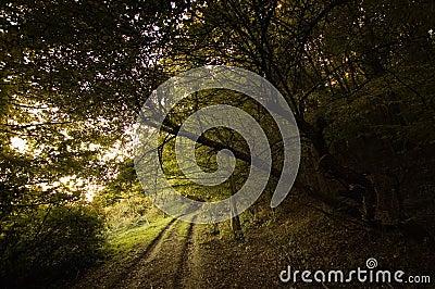 Path near a dark forest