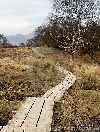 Path Over Swamp