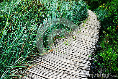 Path and reeds