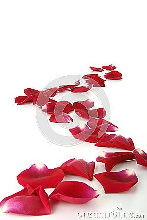 Path of rose petals