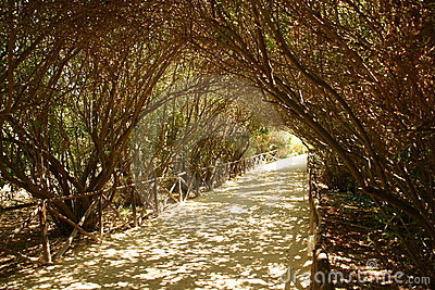 Path shaded by trees