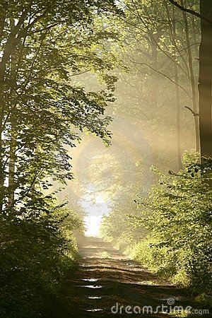 Path through Spring forest with morning sun rays