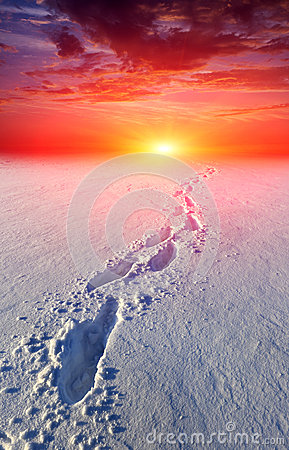 Path in steppe on sunset background