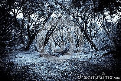 Path in a strange dark forest