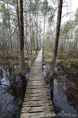Path in the swamp