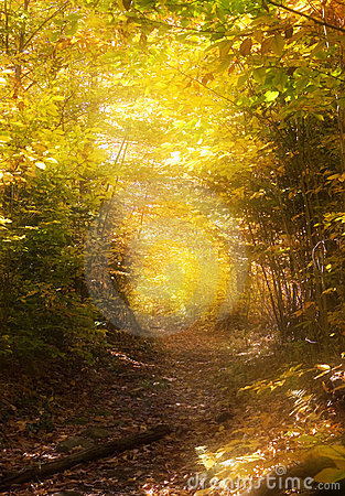 Free Path Through The Magic Forest Royalty Free Stock Photos - 3549978