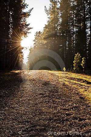 Free Path Through The Woods Royalty Free Stock Photo - 14472285