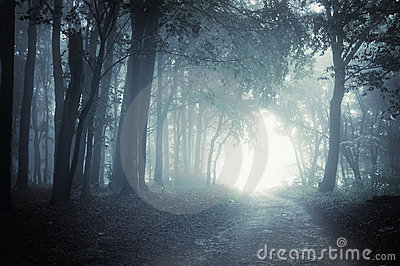 Path to light through a dark forest at night