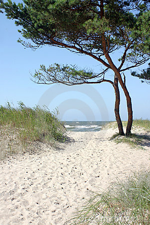 Free Path To The Beach Royalty Free Stock Photos - 2868008