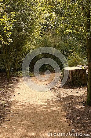 A Path Through the Trees 1