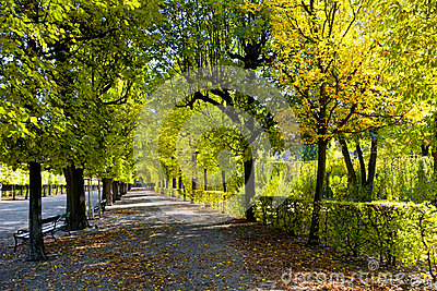 Path on the autumn park