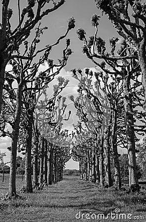 Path through Trees