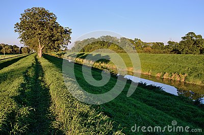 Path and trees on river bank