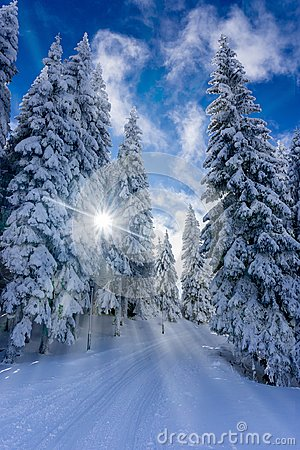 Free Path Trough Mountain Forest On A Sunny Winter Day Royalty Free Stock Image - 107096486